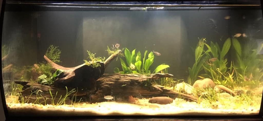 FLEX Aquarium Kit, 123 L (32 5 US Gal), Black - Fluval